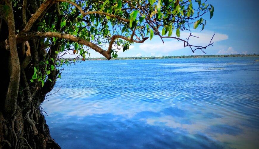 Arugam Bay